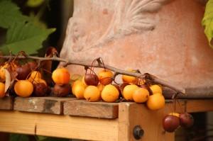8 Herbstwerk GartenLamberty