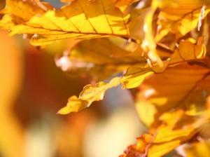 Herbstwerk15