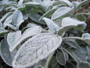 7 Winterwerk GartenLamberty